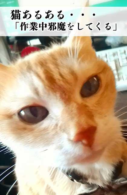 猫あるある PC作業中に邪魔をしてくる
