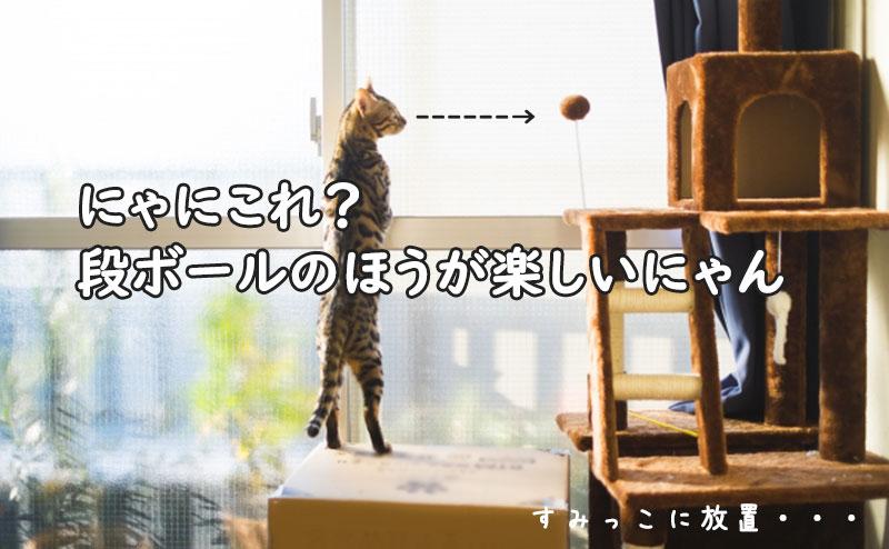 キャットタワーで遊んでくれない猫