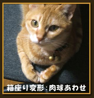 hako_cat01