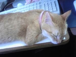 猫は何故キーボード前で寝る?