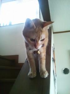 外へ出たい猫