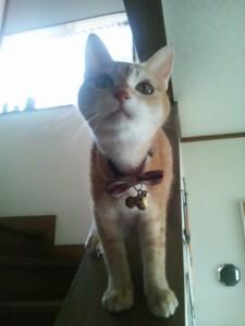 割り箸で猫脱走を止める
